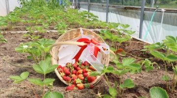Tarımsal Rehabilitasyon