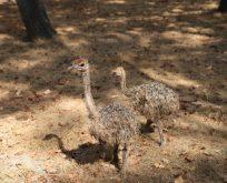 Ormanya'nın hayvan popülasyonu artıyor