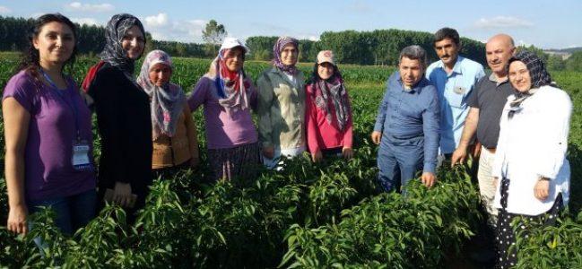Büyükşehir Belediyesi yerli tohumların peşine düştü