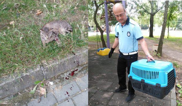 Yaralı kediye yardım eli