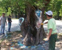 Asırlık ağaç tedavi edildi