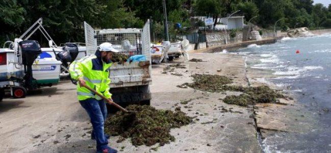 Sahillerden 10 kamyon yosun