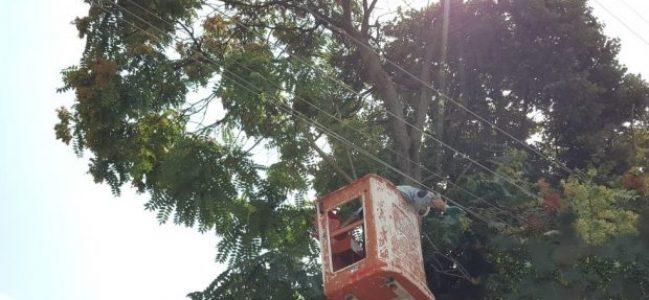 SEDAŞ ağaç budama çalışmalarına ağırlık veriyor