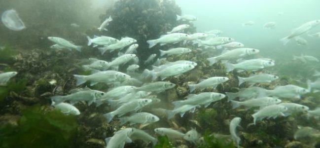 """""""İzmit körfezinde 30 türde balıkçılık yapılabiliyor"""""""