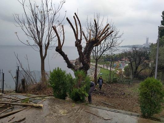 Ağaç budama çalışmaları devam ediyor