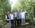 26. Yeşil İhsaniye Elma Festivali Başlıyor!