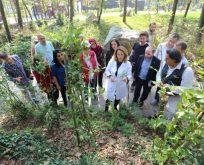 Tıbbi Aromatik Bitki Yetiştiriciliğine tam destek