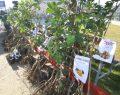 Çiftçilere sertifikalı meyve fidanı