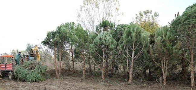 """""""Depodaki ağacın Kocaeli'ye ne faydası var"""""""
