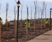 Umuttepe Kampüsüne 10 Bin Ağaç