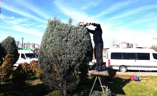 Ağaç budama çalışmaları sürüyor