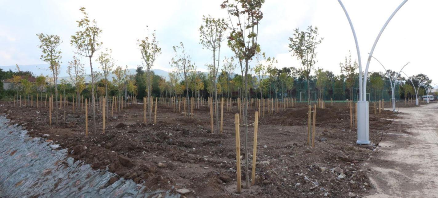 Yeniköy sahiline 15 farklı tür ağaç