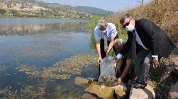 Göletlere 171 Bin Yavru Sazan Balığı Bırakıldı