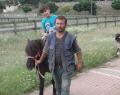 Çocuklardan Pony Atlara Yoğun İlgi