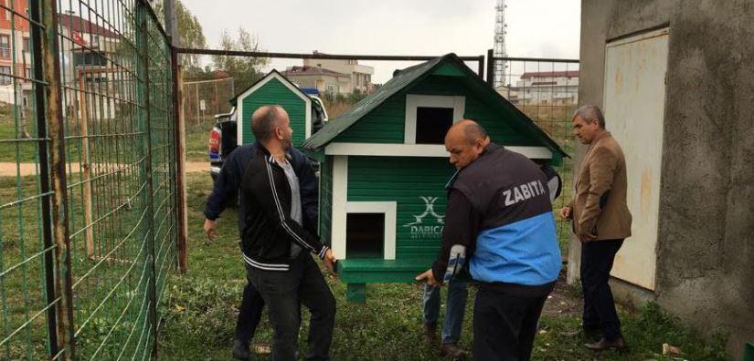 Darıca'da Sokak Hayvanları İçin Özel Çalışma