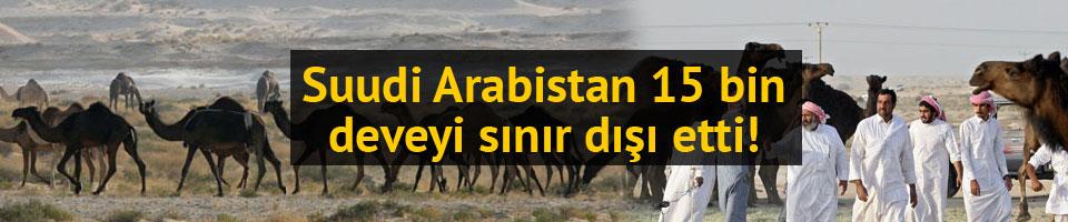 Suudi Arabistan 15 bin Katar devesini sınır dışı etti
