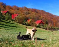 Sonbaharın gelişiyle birlikte oluşan renk cümbüşü