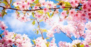 21 Mart 'NEVRUZ'  'Baharın gelişinin kutlandığı gün'