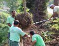 Büyükşehir 400 Ağacı Nakletti