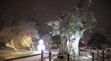 'İzmit'te ilk kar yağışını gördü'