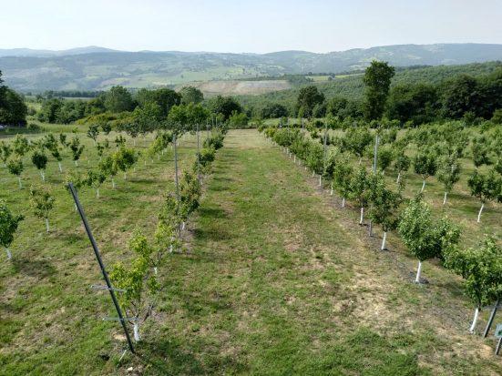 Tarımsal uygulama bahçesinde bakım çalışması